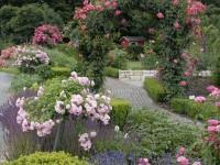 Розарий на даче своими руками (130 фото): использование в ландшафтном дизайне, правила ухода + мастер-класс для начинающих садоводов
