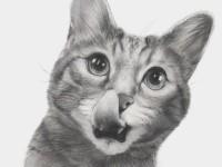Как нарисовать котенка своими руками поэтапно: мастер-класс с фото и описанием
