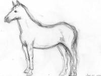 Как нарисовать лошадь своими руками пошагово: легкая инструкция с описанием всех этапов и схемы