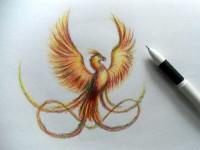 Как нарисовать птицу: поэтапная инструкция создания красивых рисунков для детей (схема + фото)