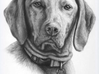 Как нарисовать собаку пошагово карандашом: легкая инструкция с фото и описанием схемы создания рисунков